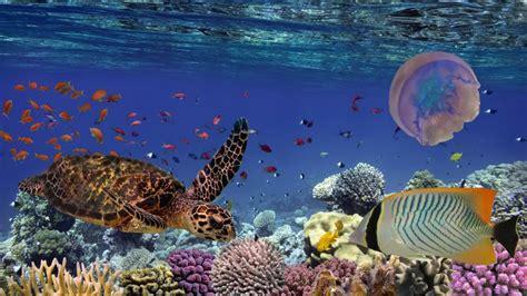imagenes sorprendentes del oceano animales del oc 233 ano en peligro de extinci 243 n hogarmania