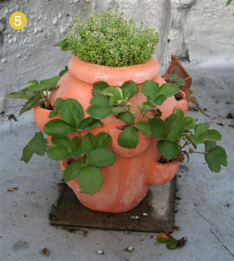 strawberry planters other uses willard and may outdoor