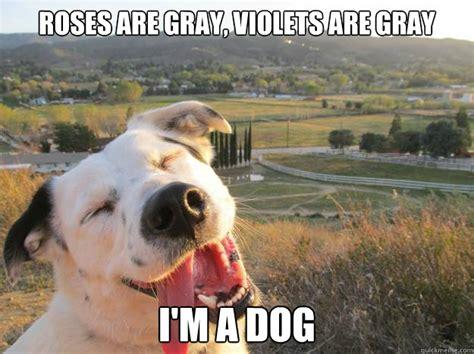 Funny Dog Face Meme - everything is gray funny animal meme