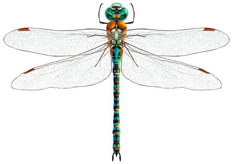 dragonfly clipart dragonfly vector png