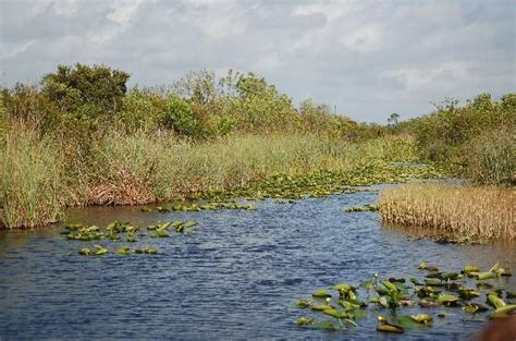 best everglades airboat tours reviews gray line miami everglades airboat adventure tour fl on