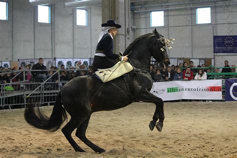 costo ingresso fiera cavalli verona fiera cavalli torna a verona