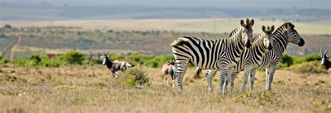 South Africa Holidays   Holidays to South Africa 2018