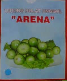 Benih Bawang Merah Sanren bibit unggul terongbulat arena bibit unggul