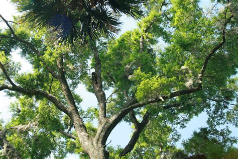 What Is A Tree Canopy Tree Canopy
