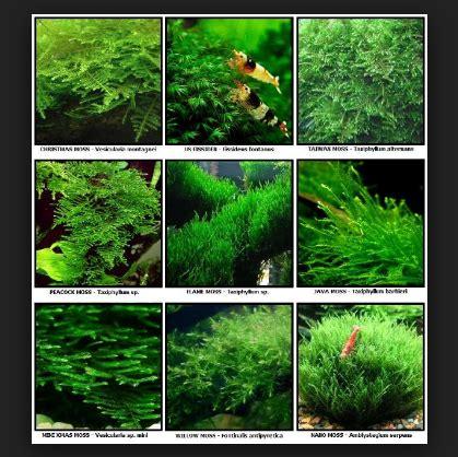 tips mudah  membuat aquascape  aquarium  murah
