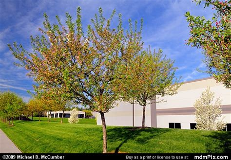 cherry tree pa cherry tree picture 022 april 25 2009 from hill industrial park pennsylvania mdmpix