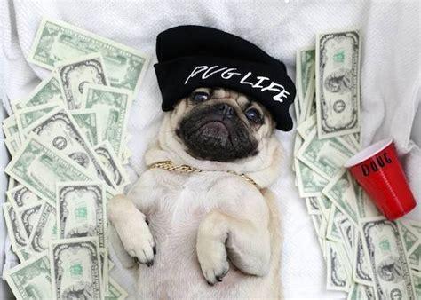 pug won t eat 10 photos that prove doug the pug is my spirit animal