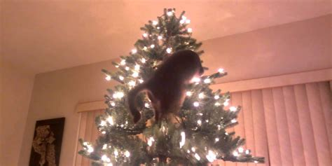 cats vs christmas trees a compilation huffpost uk