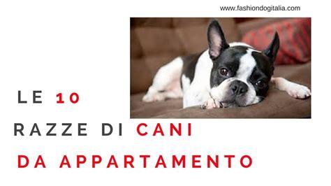 cani per appartamento le 10 razze di cani per appartamenti e piccoli spazi