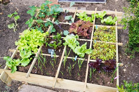 Designing Your Own Vegetable Garden Co Op Stronger Together Best Location For Vegetable Garden