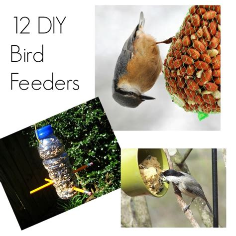 best 28 how to get birds to your bird feeder how to