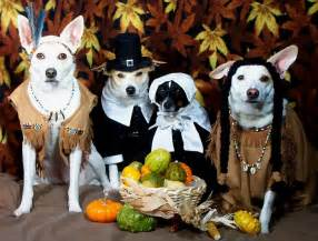 dogs thanksgiving cats challenge dogs to a thanksgiving fashion showdown