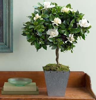 Elegant Vase Martha Stewart Gardenia Topiary With Square Metal Pot Png