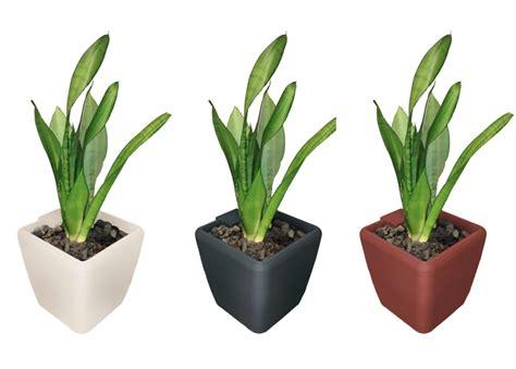unique indoor plant  air purification garden plants