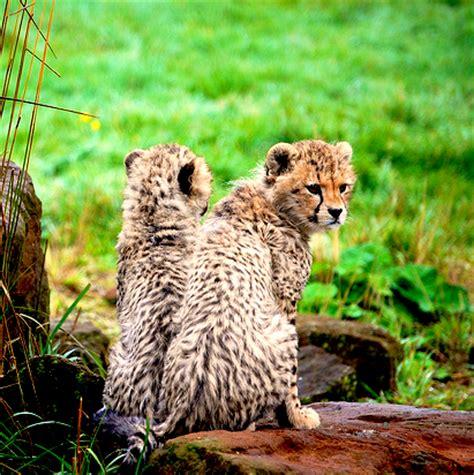 191 hay algo mas rapido que un guepardo liverpool es parte de mi vida definitivamente no hay animal m 225 s bonito que el cachorro