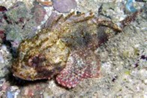 Dr Scholz Sponge this week in fish moorish idols and sponge eaters