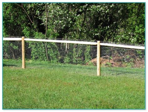 chicken wire fence  dogs