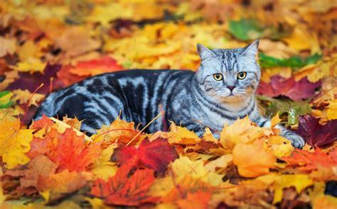 wallpaper chat automne 1001 jolies exemples d images d automne pour fond d 233 cran