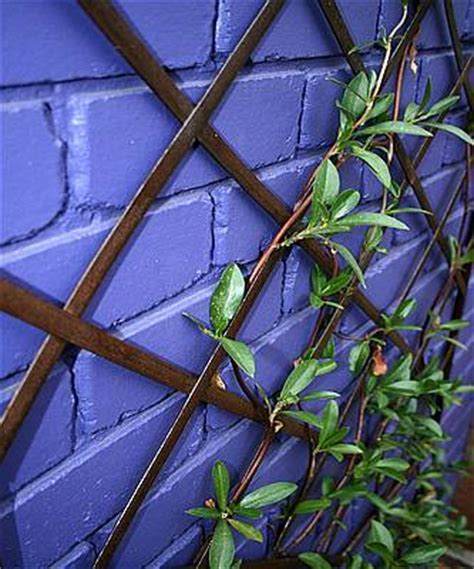 gardening with wooden vine supports