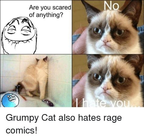 cat rage room no are you scared of anything grumpy cat meme on me me