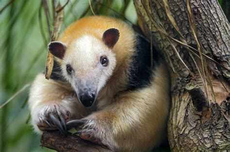 cutest animals  south america realwords