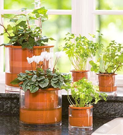 house plant ideas indoor plants decoration decoration ideas