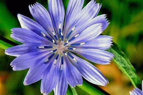 rimedi fiori di bach floriterapia rimedi floreali bach psicoterapeuta bologna