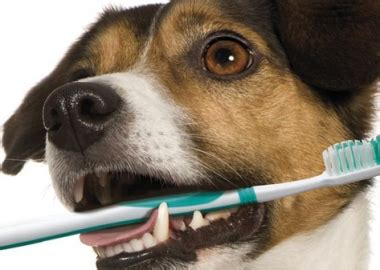 puppy teething bad breath susan bennet author at all pet news