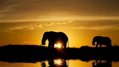 wallpaper full hd elephant elephant hd wallpapers