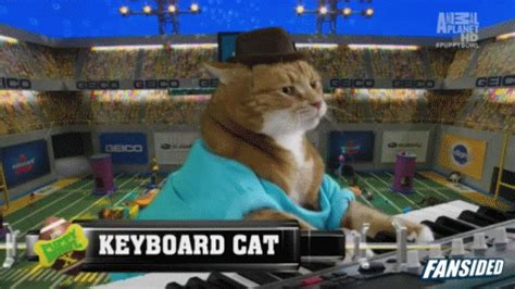 puppy keyboard puppy bowl 2014 keyboard cat jams out at halftime show gif