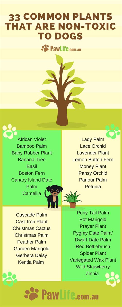 what plants are poisonous to dogs 33 common plants that are non toxic to dogs paw life
