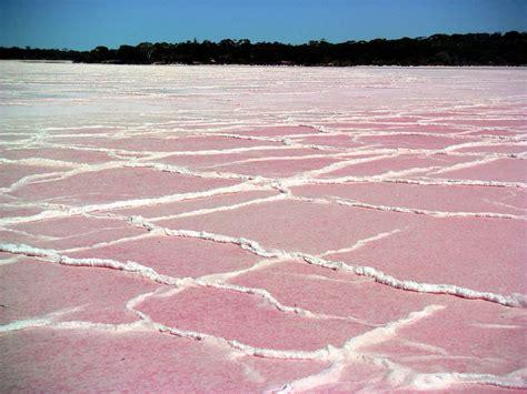 pink lake australia pretty pink lakes across the globe 54 pics