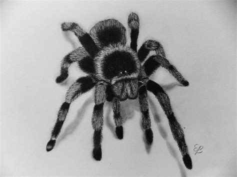 How To Draw A Spider Step By Step 3d Illusion Youtube 3d Spider