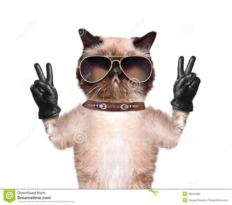 Cat Time Black Leather 陝at with peace fingers in black leather gloves stock photo