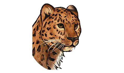 imagenes de jaguares para dibujar como desenhar uma on 231 a pintada jaguar animais how to