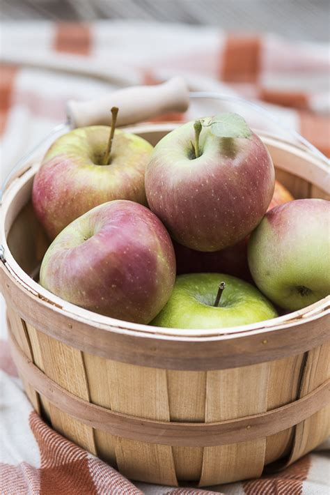 apples for dogs diy dehydrated apple chips for dogs daily tagdaily
