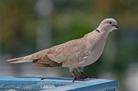 bird photo identification environmental science policy