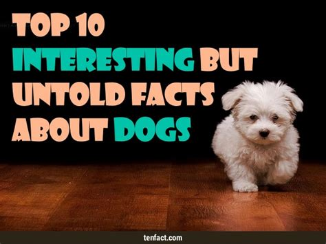 interesting facts about dogs top 10 interesting but untold facts about dogs