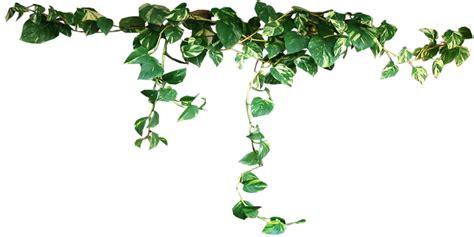 Daun Rambat Merambat Artificial Leaf Leaves Climbing Garland 3 plants png image hq png image freepngimg