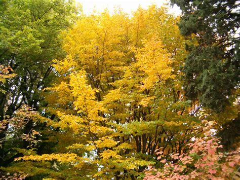 imagenes naturaleza otono im 225 genes de la ciencia y la naturaleza jardines en oto 241 o