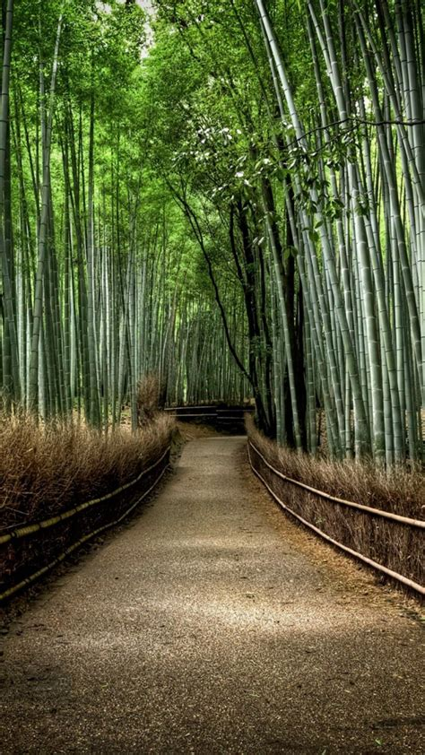 japan landscapes nature forest bamboo path national
