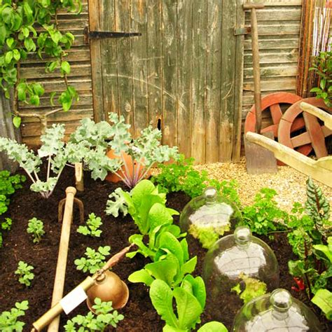 Pics Of Vegetable Gardens 11 Pictures To Start Vegetable Gardening In Small Spaces