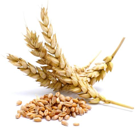 is wheat a whole grains do you a wheat addiction the sleuth journal