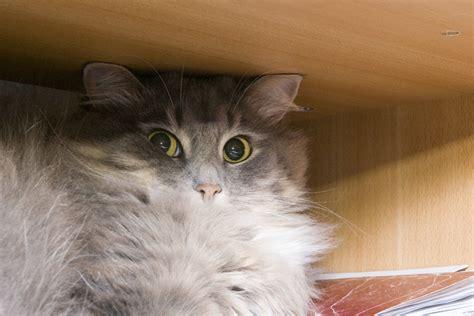 images cats random cat images