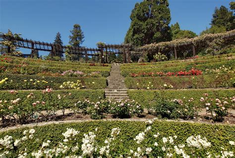 Berkeley Garden by New Book Documents Berkeley S New Deal Legacy Berkeleyside