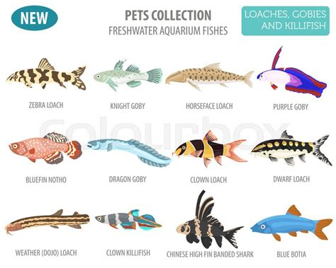 freshwater aquarium fishes breeds icon stock vector