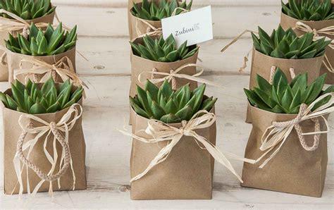 piante grasse da interno piante grasse piante da appartamento zubini