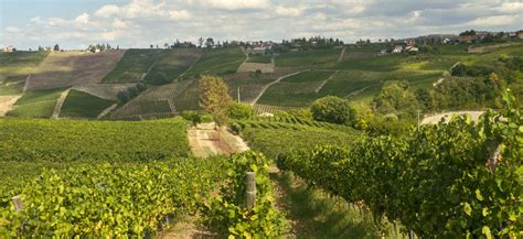 oltrepo pavese oltrepo pavese wine tour from pavia le baccanti tours