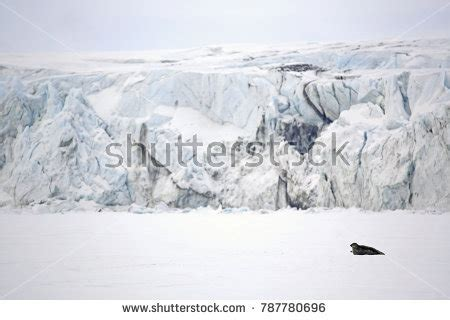 svalbard stock images royalty  images vectors